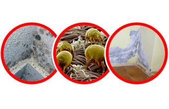 ¿Pueden afectar las humedades a nuestra salud?